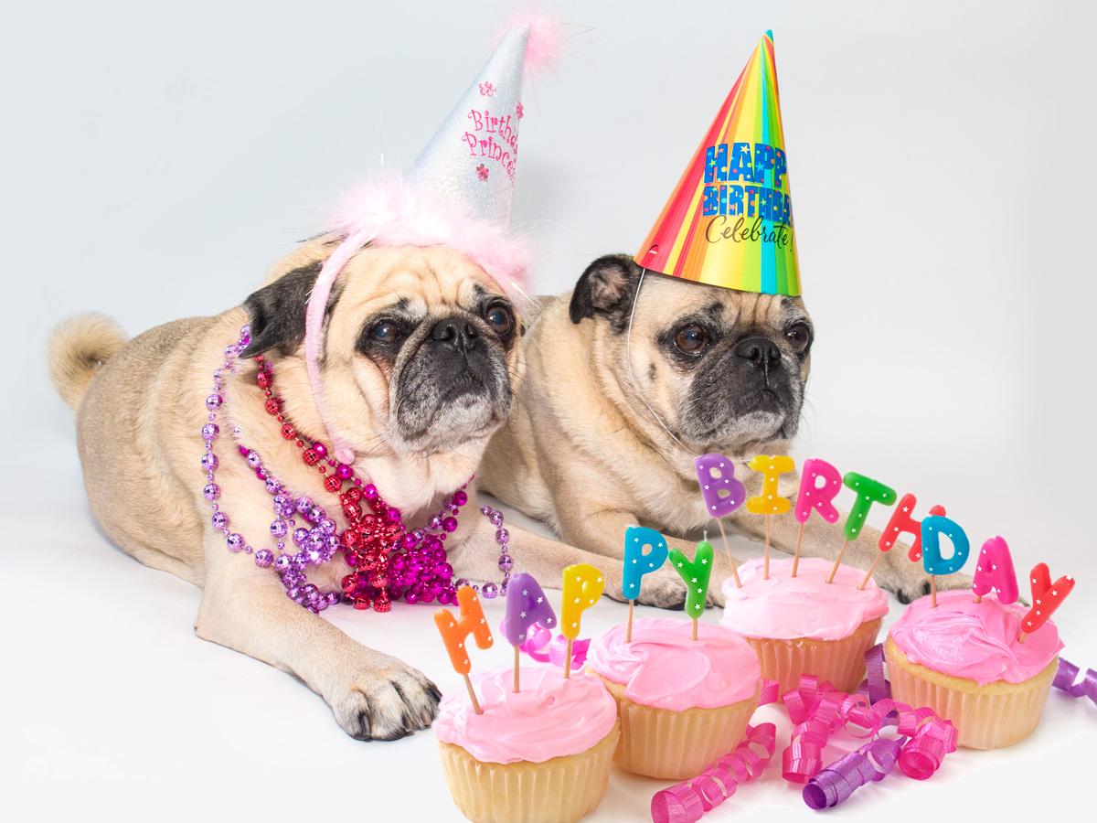 Happy Birthday Lady Images ~ Happy birthday lady isabella u pugsville u lord byron and lady