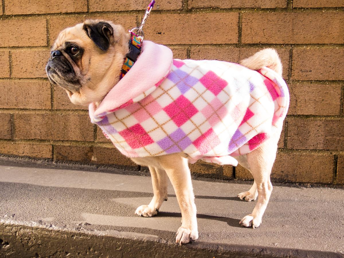 pinkcoat---1
