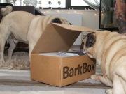barkbox - 1