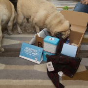 barkbox - 13