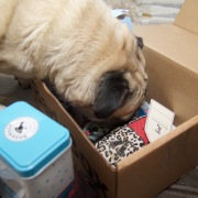 barkbox - 17