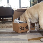 barkbox - 2