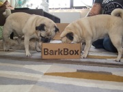 barkbox - 3