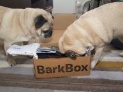 barkbox - 4