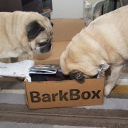 barkbox - 4