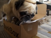 barkbox - 5