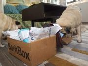 barkbox - 6
