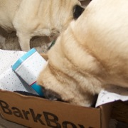 barkbox - 7
