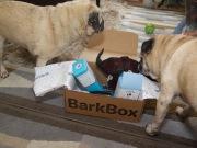 barkbox - 8