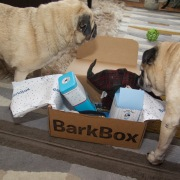 barkbox - 8